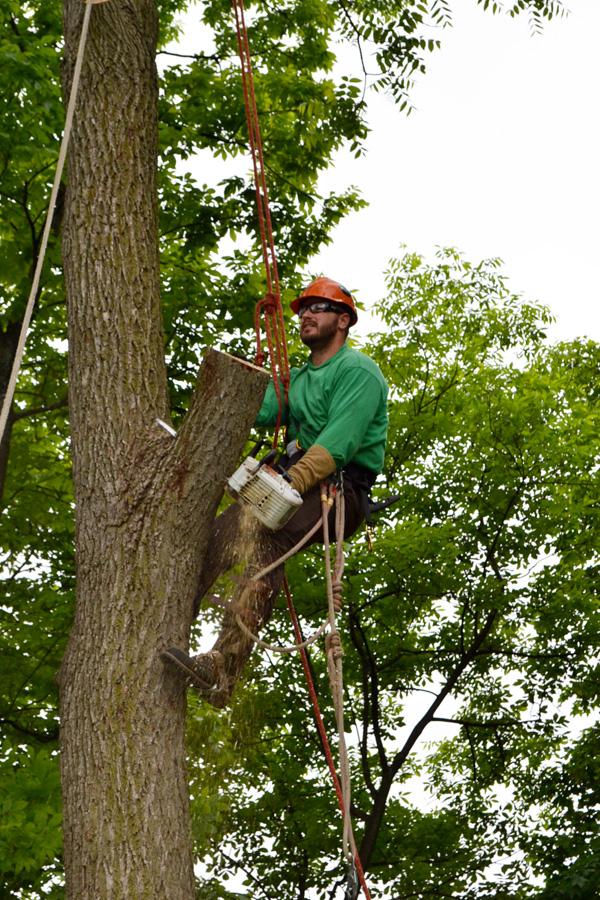 Frankenmuth-Job-Tree-Removal