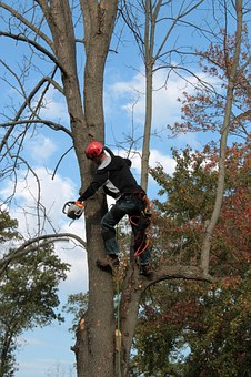 Tree Maintenance Saginaw