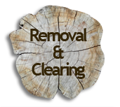 Saginaw Tree Removal
