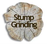 Stump Grinding Service in Saginaw and Bay City