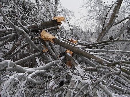 Saginaw Tree Service Prevents Damage
